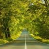 la strada immersa nel verde